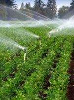 افزایش ۴۳ درصدی بهره وری آب کشاورزی در خوزستان