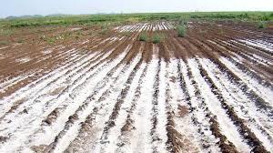 کوتاهی محیط زیست در مقابل سازمان آب و برق باعث شور شدن اراضی کشاورزی شد / هزاران هکتار اراضی کشاورزی در معرض نابودی