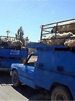 چرا قاچاقچیان هورالعظیم را برای قاچاق دام به عراق انتخاب کردند؟