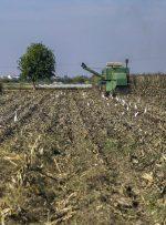 بیمه محصولات کشاورزی خوزستان تا ۱۱ بهمن تمدید شد