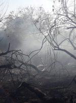 آتش به جان جنگلهای دزفول افتاد